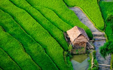 Little house by a Sapa rice field
